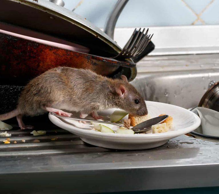 Delta-Pest-Control-Rodents