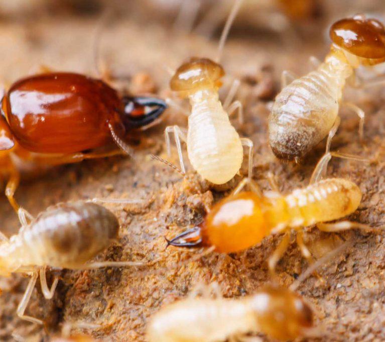 termite-treatment-columbia-sc