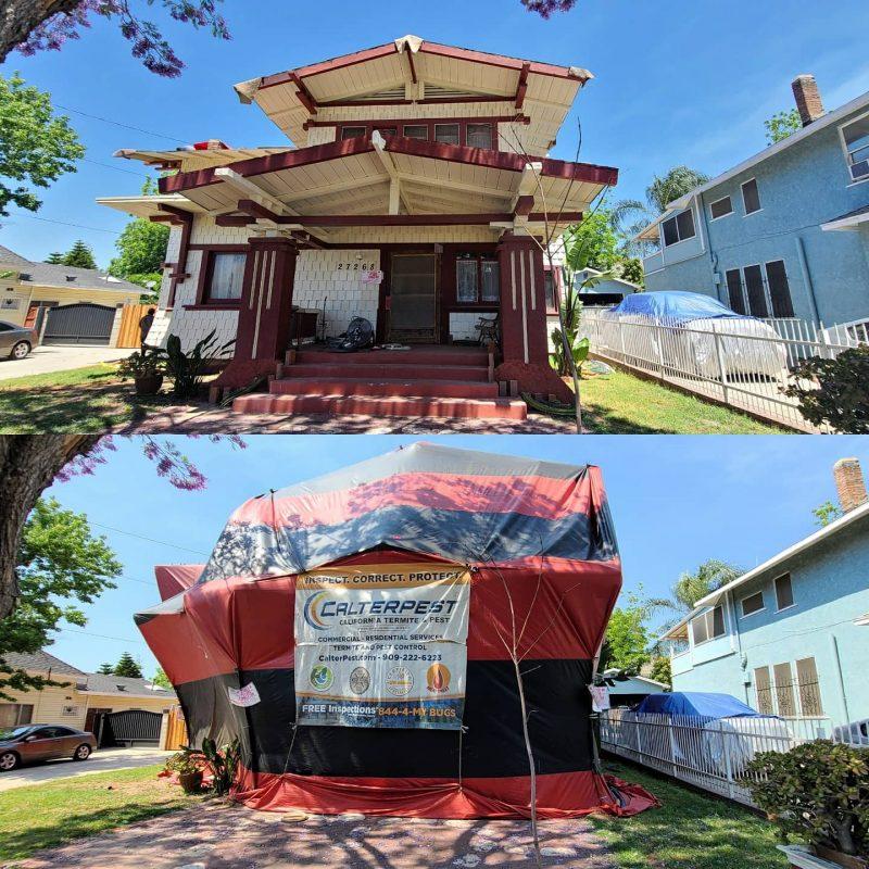 residential termite