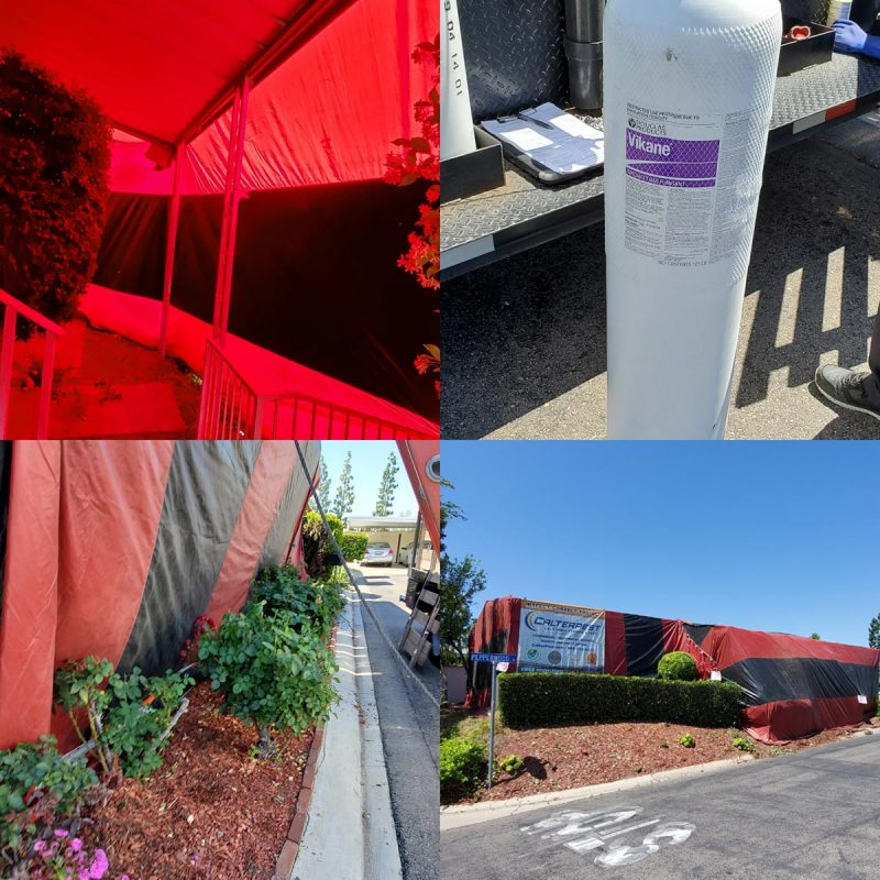 fumigation of mobile home