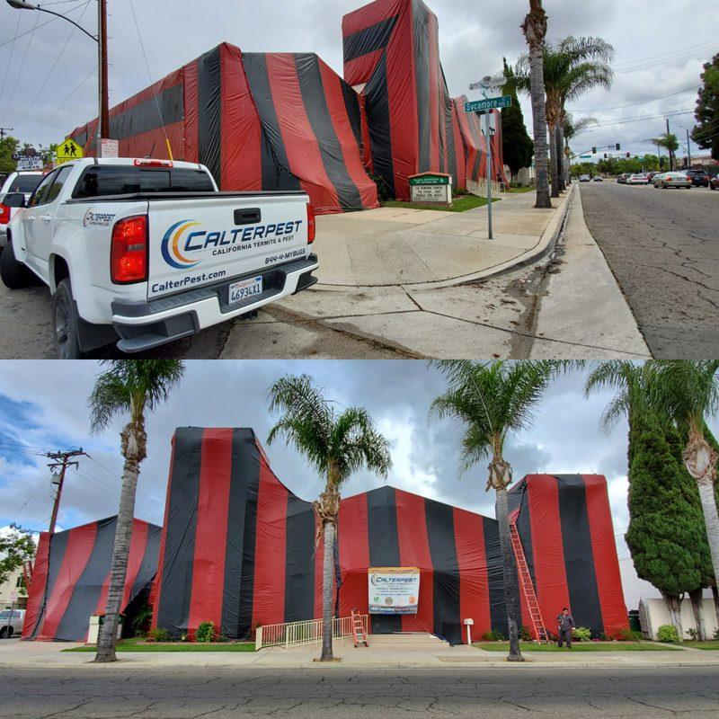 Local Church Fumigation Treatment