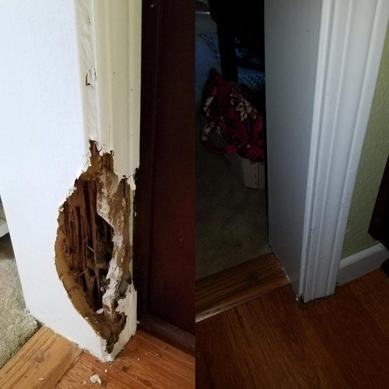 major termite damage
